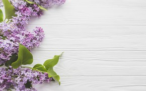Wallpaper flowers, branches, spring, Lilac