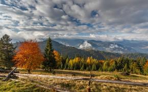 Picture autumn, trees, landscape, mountains, nature