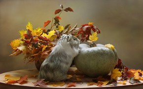 Picture autumn, animals, leaves, October, pumpkin, Guinea pig, composition, autumn games