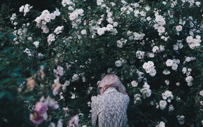 Picture Girl, Girl, Roses, Roses