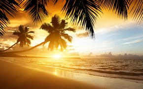 Picture beach, sunset, nature, tropics, palm trees