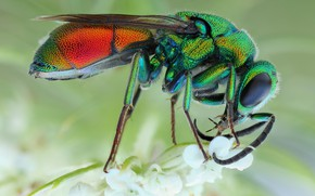 Picture eyes, macro, flowers, pose, background, OSA, legs, insect, beauty, green, rainbow, brilliant, bestanca
