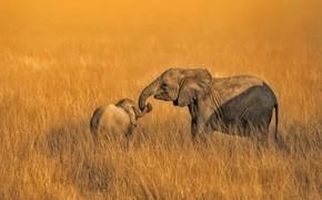 Wallpaper Amboseli, Kenya, National Park, elephants, family