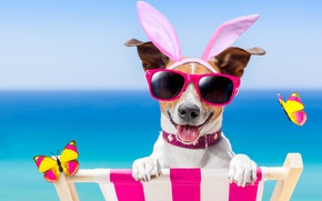 Wallpaper dog, glasses, butterfly, bunny ears, beach, funny, beach, happy, vacation, dog, sunglasses