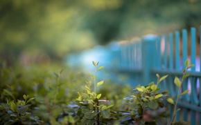 Wallpaper greens, summer, macro, the fence, spring, fence, bokeh