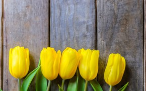 Picture flowers, yellow, Tulips, wooden background