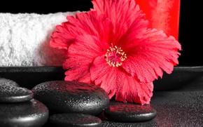 Picture flower, drops, macro, sheet, hibiscus
