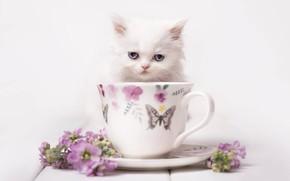 Wallpaper look, flowers, background, muzzle, mug, kitty, white kitten