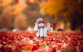 Picture autumn, leaves, nature, the game, baby
