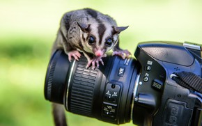 Wallpaper camera, the camera, animal
