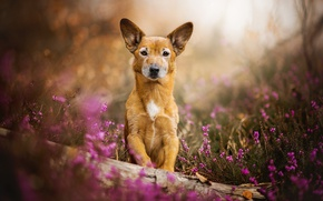Picture flowers, dog, red, Toby