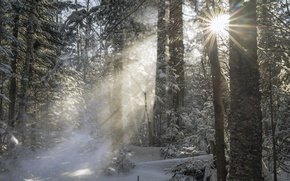 Picture winter, forest, the sun, rays, trees