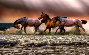 Picture sea, wave, the sky, foam, rays, light, clouds, shore, horses, horse, running, surf, three, trio, …