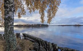 Picture autumn, lake, birch