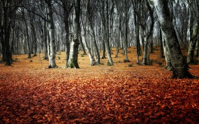 Wallpaper forest, autumn, Park, trees