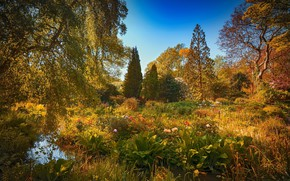 Picture water, trees, flowers, Park, plants