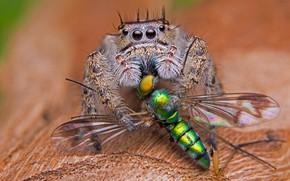 Picture macro, death, background, spider, predator, leaf, mining, jumper, pechalka, the Hoppy