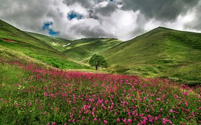 Picture field, flowers, nature, hills