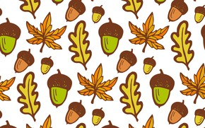 Picture Leaves, White background, Texture, Acorns