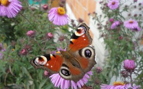 Picture macro, flowers, butterfly