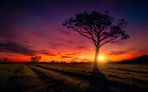 Picture field, the sky, sunset, tree