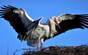 Picture nature, socket, storks