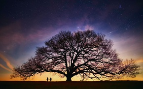 Picture the sky, stars, night, people, tree, the evening, pair, the milky way, silhouettes