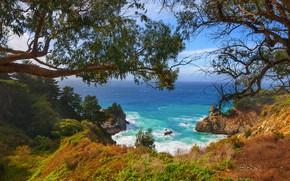 Picture summer, trees, sea, coast line