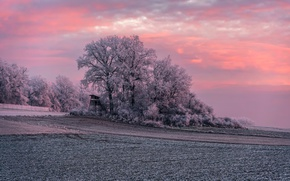 Picture winter, frost, field, sunset