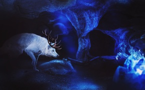 Picture ice, wolf, fantasy, cave, by Fiirewolf
