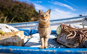 Wallpaper cat, look, boat, ear