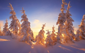 Wallpaper tale, the sky, blue, family, the top, frost, snow, light, rays, Sunny, branches, Christmas trees, ...