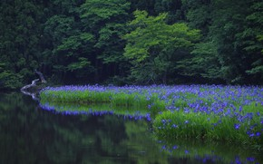 Picture forest, flowers, nature, river