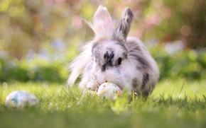 Picture grass, nature, animal, eggs, rabbit, Easter, bokeh