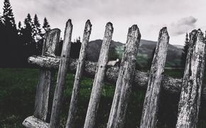 Picture the fence, Cornelia Pavlyshyn, fence