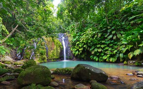 Picture greens, forest, tropics, stream, stones, foliage, waterfall, moss, the bushes, Guadeloupe, Sainte-Rose, Cascade Bis
