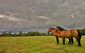 Picture greens, field, summer, the sky, grass, clouds, trees, clouds, nature, overcast, mood, horse, horse, horses, …