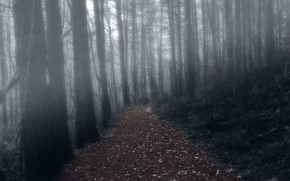 Picture forest, night, fog, trail