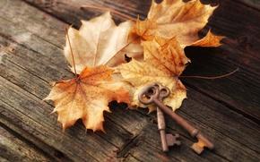 Picture autumn, leaves, Board, maple, keys