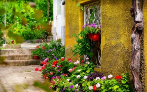 Picture Window, Flowers, Flowers, Colors, Yard, Pots