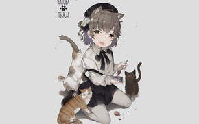Wallpaper cats, background, cats, anime, girl, grey background