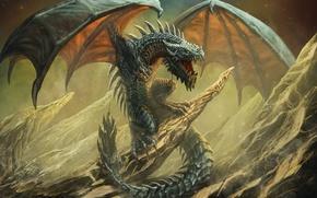 Picture dragon, Wyvern, Art Edit, Wyvern