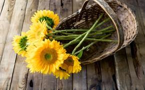 Picture flowering, sunflower, petals, sunflower, flowers, flowers