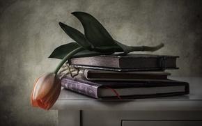 Wallpaper flower, books, Tulip, style