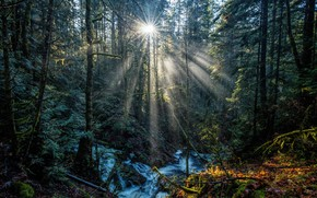 Picture forest, leaves, the sun, rays, trees, stream, moss, Canada, Vancouver Island, National Parks