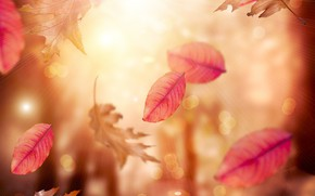 Wallpaper leaves, blur, autumn, falling leaves