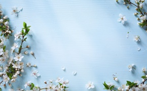 Wallpaper flowers, spring, Apple, wood, blue, blossom, flowers, spring
