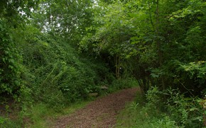 Picture Greens, Trees, Forest, Trail, Green, Forest, Trees, Path