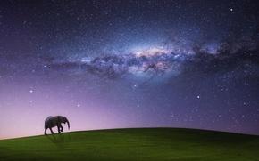Picture field, the sky, stars, night, sleep, the milky way, walking elephant