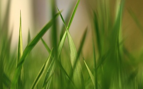 Picture greens, grass, grass